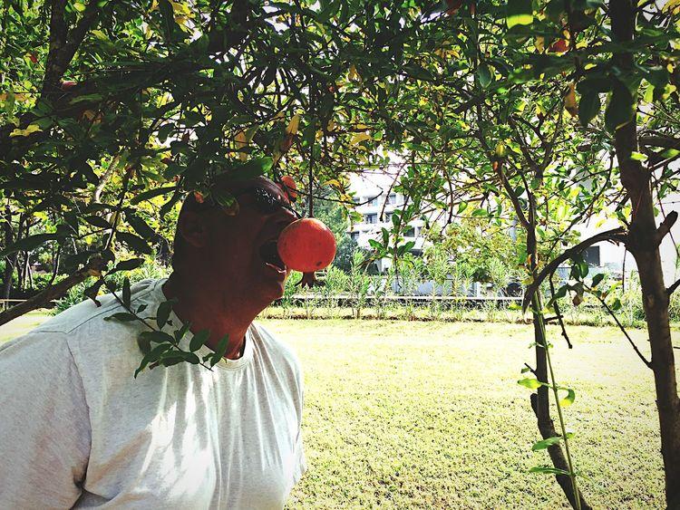 Granatapfel Fun Türkei Obst & Gemüse Sommer Sonne Sonnenschein ❤