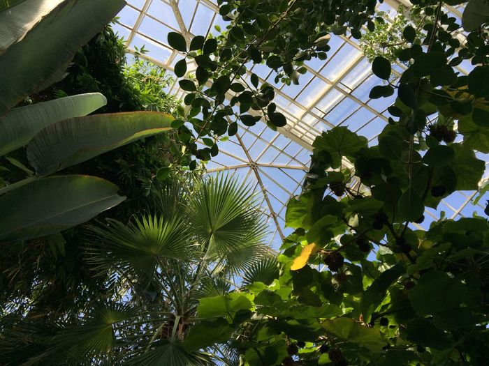 Im Botanischen Garten Conservatory Architecture Blossom Blue Sky Botanical Gardens Cacti Cactus Close-up Colorful Desert Detail Exotic Flowers Garden Greenhouse Leaves Plants Plants And Flowers Prickle Spine Succulents Sunny Sunroom Tropical Winter Garden