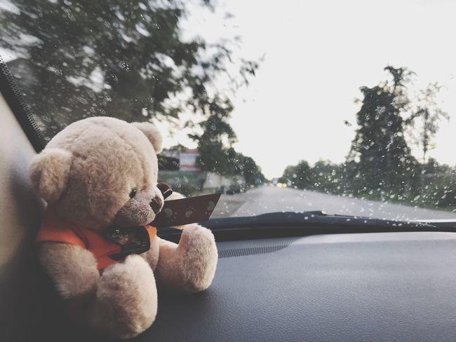 EyeEm Selects Teddy Bear Stuffed Toy Transportation Day No People Close-up Outdoors Mammal Car Rain Sad Alone Glass Drive Move