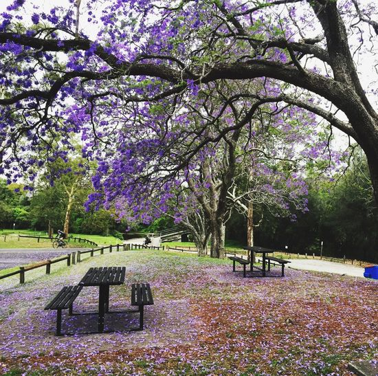 View of flower trees in park