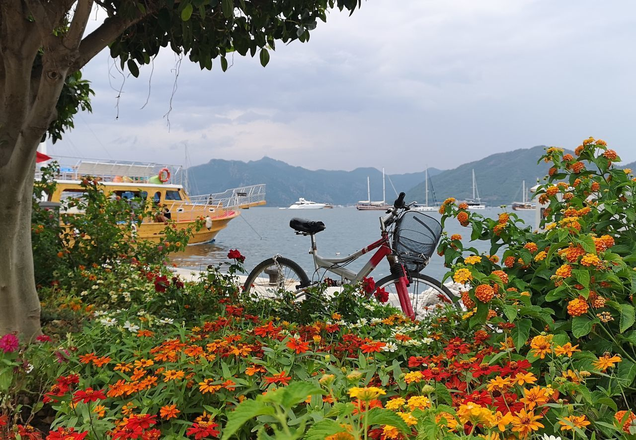 plant, beauty in nature, growth, mountain, nature, transportation, flower, mode of transportation, flowering plant, day, sky, mountain range, freshness, land vehicle, cloud - sky, tree, scenics - nature, no people, land, field, outdoors, wheel