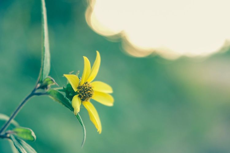 The Week On EyeEm Eyeemphotography Flower Nature Fragility Growth Plant Yellow Close-up Beauty In Nature Freshness Outdoors No People Petal Day Flower Head Blooming EyeEm Selects EyeEmBestPics EyeEm Eye4photography  EyeEm Best Shots EyeEm Gallery