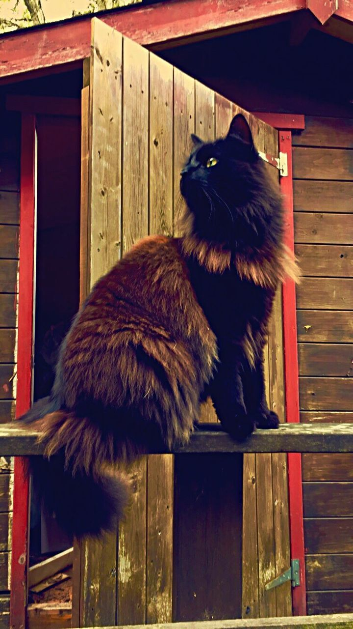 wood - material, domestic cat, one animal, animal themes, mammal, domestic animals, pets, door, no people, feline, day, outdoors