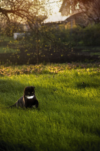 View of cat sitting on field