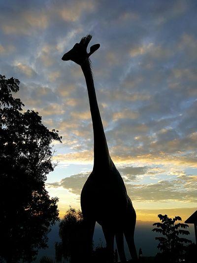 Silhouette Statue Sunset Sculpture Sunrise Giraffe Silhouette Silhouette Of Giraffe Kenya Africa