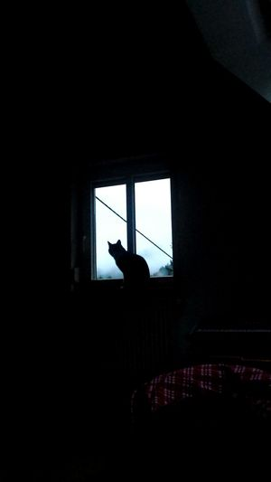 Cats Of EyeEm Cat Cats Cat♡ Window Morning April