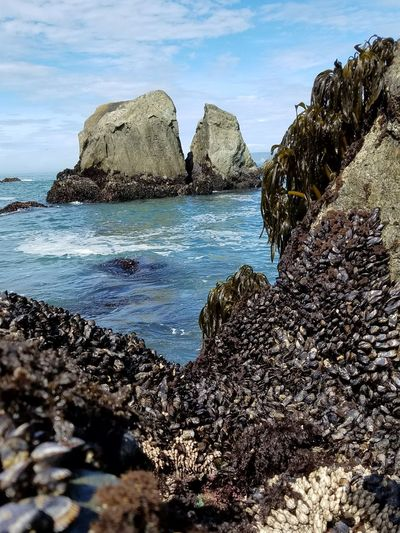 Sea Rock - Object Beach Outdoors Water Beautiful Sea Creatures Sea Creatures Close-up Summer Wave Muscle Rocks Muscle Rocks At Beach Muscle Shells Beautiful Ocean View Beautiful Ocean View With Rocks