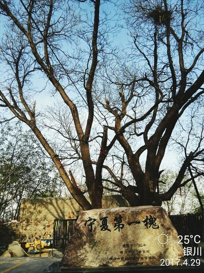 Tree Text Communication Day Outdoors Sky Low Angle View Branch Growth Nature No People Architecture