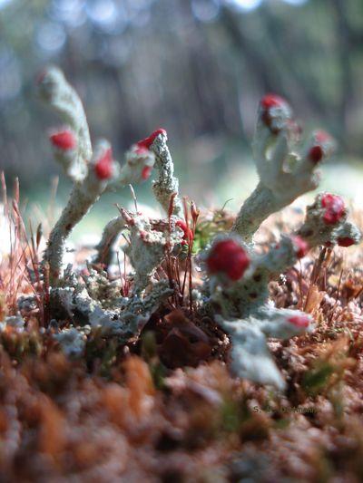 Pilze Fotografieren Sporen Waldspaziergang Beauty In Nature Geweihförmige Holzkeule Nature No People Outdoors Pilze Im Wald Selten