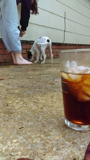 Hanging Out Taking Photos Enjoying Life Depth Of Field Puppy Drinking Drinks Drink Thirsty  Thirst Check This Out Relaxing Dog Cute Dog