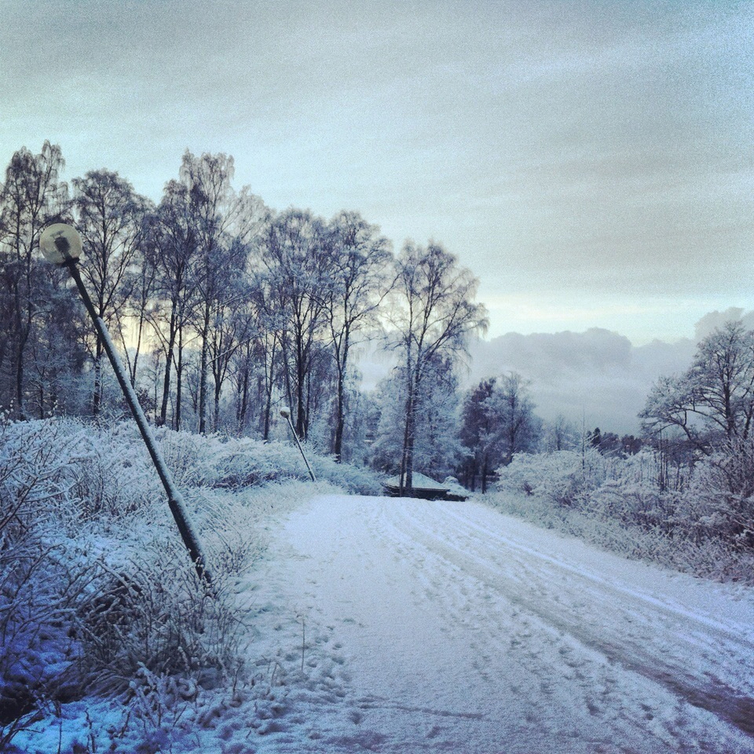 snow, winter, cold temperature, tree, tranquil scene, sky, tranquility, season, weather, the way forward, scenics, landscape, nature, beauty in nature, bare tree, covering, road, non-urban scene, mountain, cloud - sky