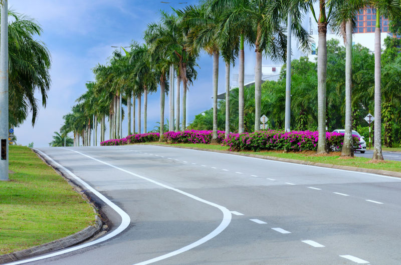 Palm Trees Amidst Road In City