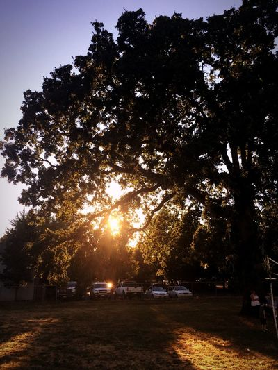 Sunset through the Oak Sunset Oak Tree Football Practice Walking The Track Taking Photos Enjoying Life Colour Of Life Beauty In Nature Perspective Photography Beautiful Day