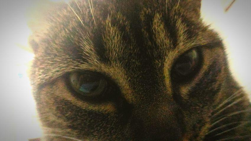 Cat Love Cat Eyes Esa es mi gata.. That's My Cat