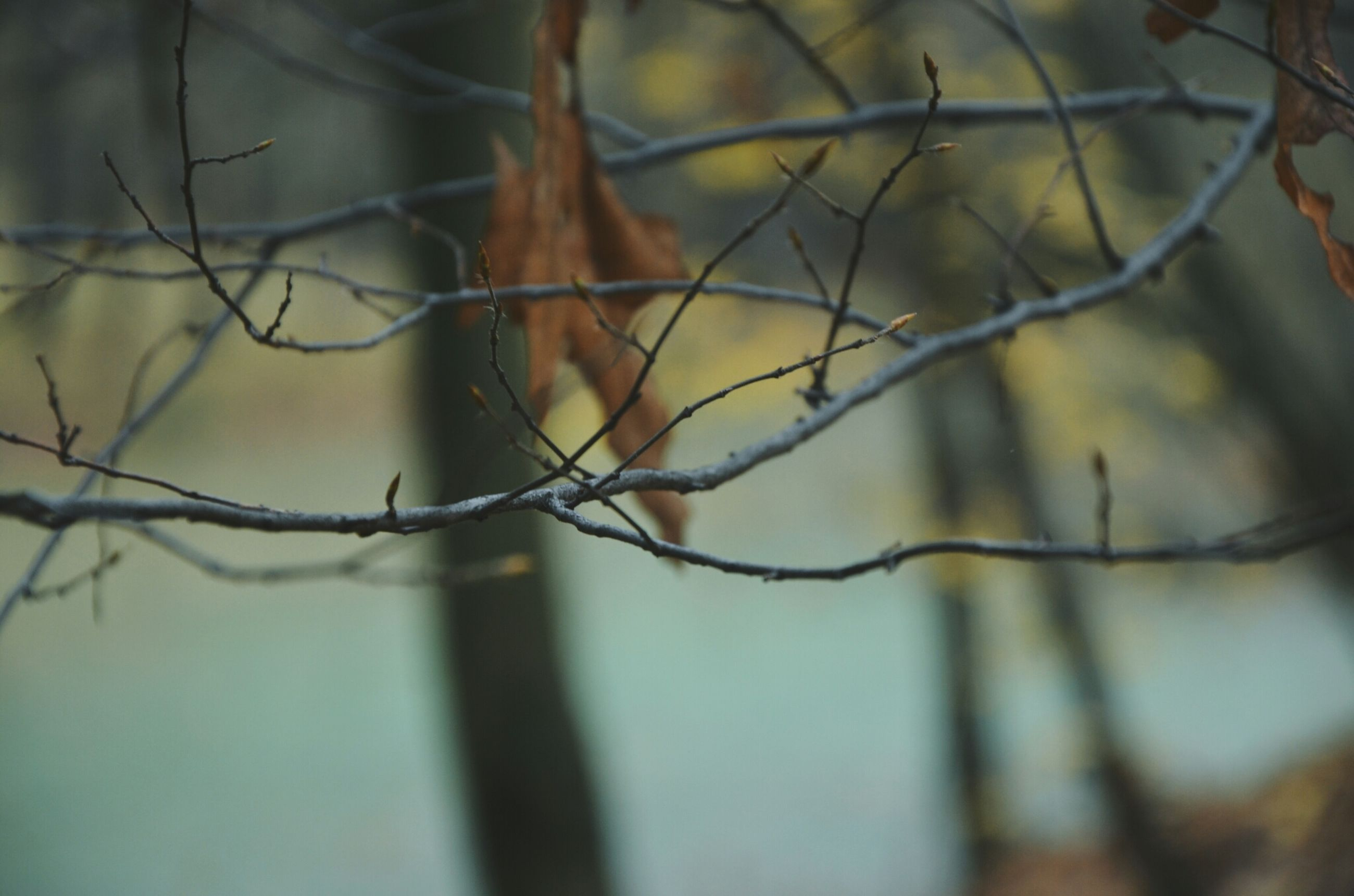 branch, animal themes, one animal, focus on foreground, nature, close-up, twig, selective focus, tree, wildlife, animals in the wild, no people, outdoors, day, bare tree, beauty in nature, tranquility, dry, plant, perching