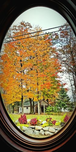 Window Indoors  Day No People Close-up Tree Michigan fall Scenics Beauty In Nature Tree Tree Area