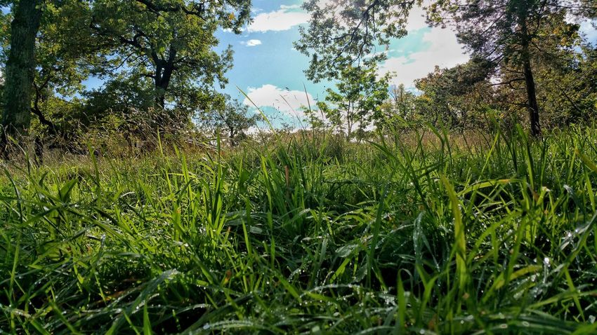 Grass Nature Growth Day No People Outdoors Freshness Growth Low Angle View Landscape