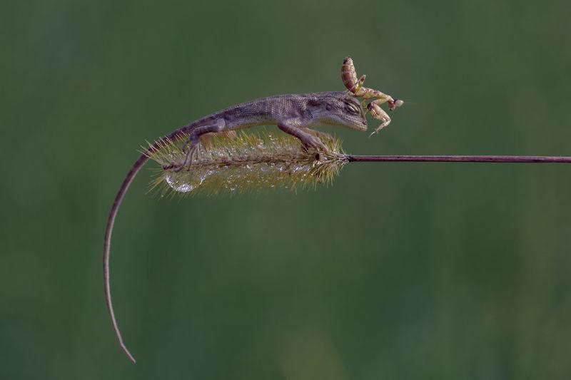 Close-up of animals on plant