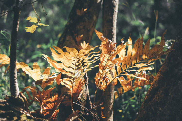 Fern Growth Outdoors Plant Leaf Day No People Tree Freshness Beauty In Nature Autumn EyeEmNewHere EyeEm Ready