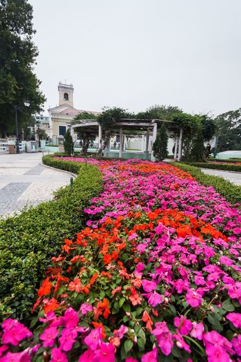 Holiday in Macau - Old Taipa Village Macao Architecture ASIA Beauty In Nature Day Flower Fragility Freshness Growth Holiday Macao  Macao China Macau Macau, China Nature No People Old Outdoors Plant Taipa  Travel Destinations Vacation Village