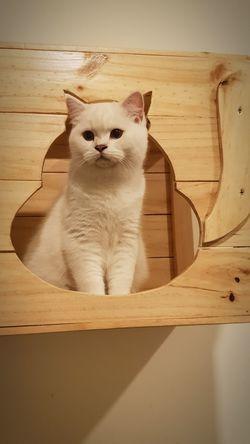 Pets Portrait Kitten Sitting Feline Domestic Cat Animal Themes