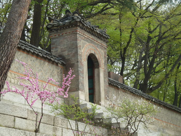 Changdeokgung Building Exterior Changdeokgung Palace Garden Nature Royalgardens Tree
