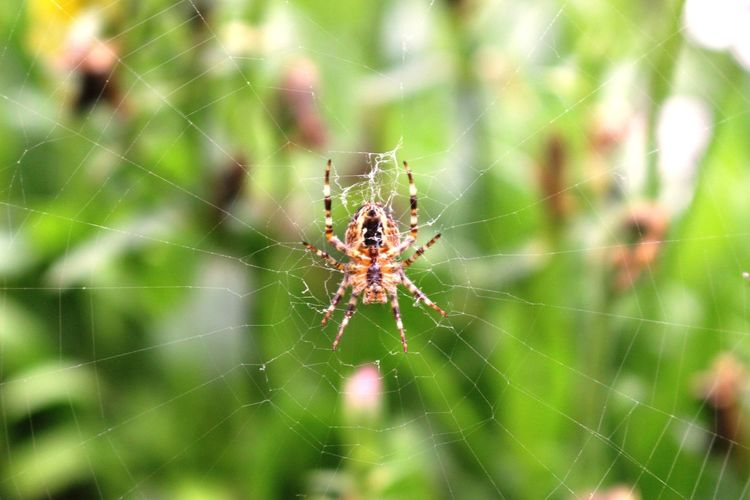 Spider Spider Web One Animal Nature Animal Themes Web Survival Animals In The Wild Focus On Foreground Fragility Close-up Intricacy Outdoors Animal Leg Day Animal Wildlife No People