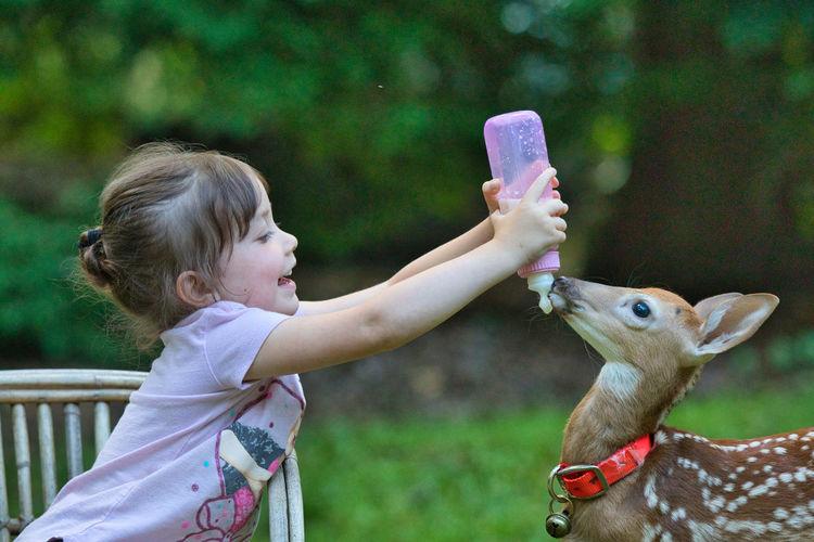 Cute girl feeding deer outdoors