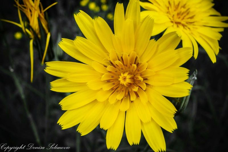 Flowers, Nature And Beauty Yellow Flower Sharpshutters Fine Art Photography Nature Focused Colourkey