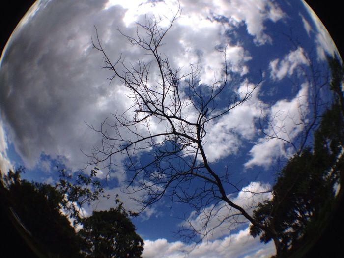 #olloclip #fisheye #fisheyelens #nofilter #natureza #flor #céu #nuvem #flower #sky #cloud #nature
