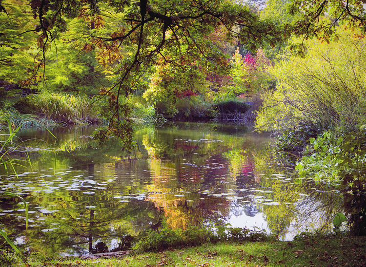 Autumnal pond reflecting beautiful colors Autumn Beauty In Nature Countryside Day Fall Colors Forest Growth Lake Landscape Nature No People Outdoors Pond Reflection Scenics Tranquil Scene Tranquility Tree Water WoodLand
