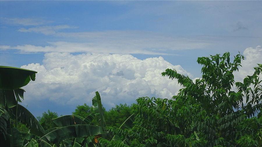 Nature Blue Sky