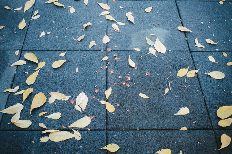 leaf on floor
