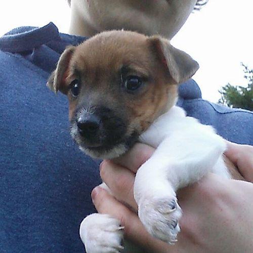 My new little beast 👌🐶 Dogs Dog Puppy Beast Roadmandog L4l
