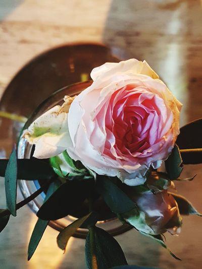 Rosé Rose - Flower Rose🌹 Postcard Picture Postcards Writing Postcards Postcard Flower Head Flower Flower Head Flower Rose - Flower Petal Close-up Vase