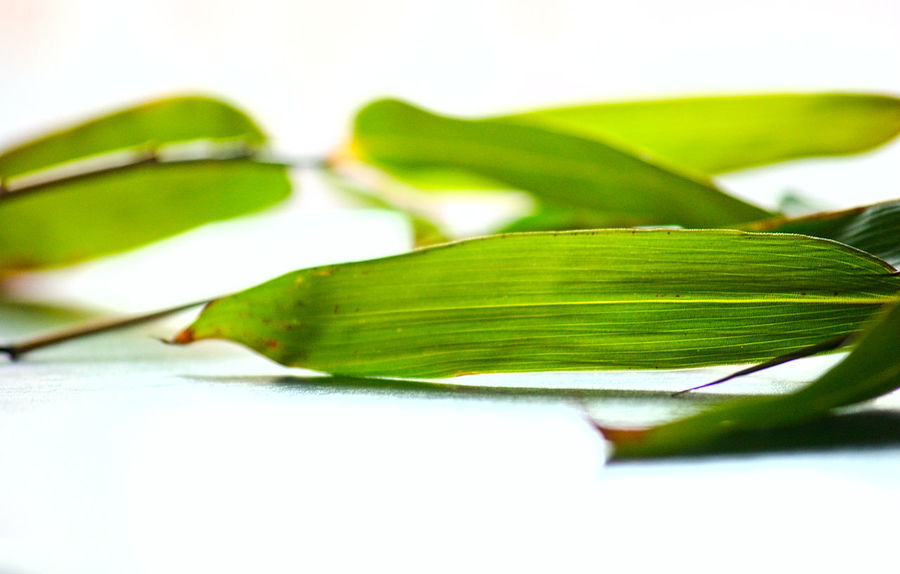 Bamboo Leaves Bamboo Beauty In Nature Close-up Day Fragility Freshness Green Color Growth Leaf Nature No People Plant White Background