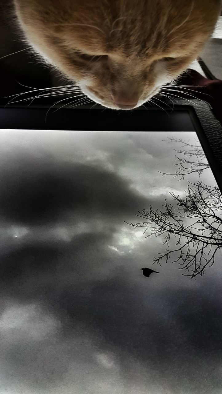 one animal, animal themes, cloud - sky, domestic cat, sky, bird, nature, sunset, real people, flying, indoors, one person, pets, mammal, day, close-up, people