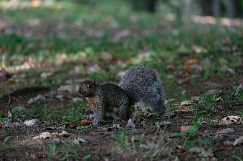 Animal Wildlife Animals In The Wild Day Field Land Mammal Nature No People One Animal Outdoors Vertebrate