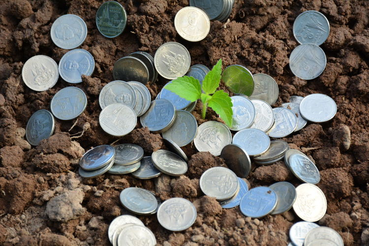 High angle view of seedling amidst coins on ground