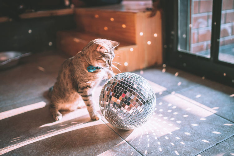 What light through yonder window breaks? Cat and Mirror ball Nightlife Day Reflection Domestic Animals One Animal Animal Themes Animal Cat Cats Cat Lovers Cat♡ Cathedral Ball Lifestyles Light And Shadow Light Lighting Equipment Happiness Celebration Indoors  Sun Sunset Sunlight Vintage