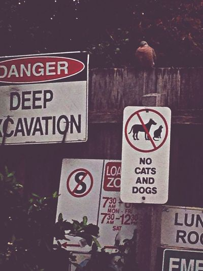 dove&signs