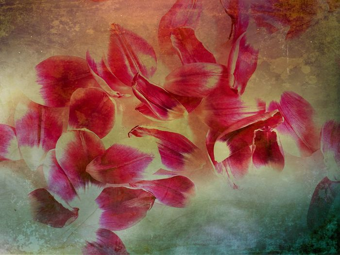 Tulip Leaves Tulip Leaf Tulip Flower Plant Flowering Plant Beauty In Nature Petal Vulnerability  Freshness Fragility Close-up Flower Head Inflorescence Nature Pink Color Growth No People Backgrounds Indoors  Textured  Day Flower Arrangement