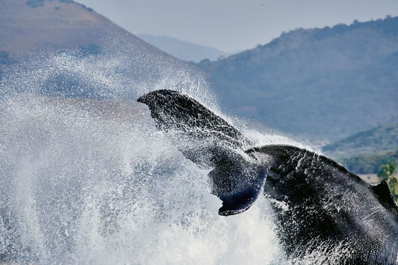 Whale tail splashing water against mountains