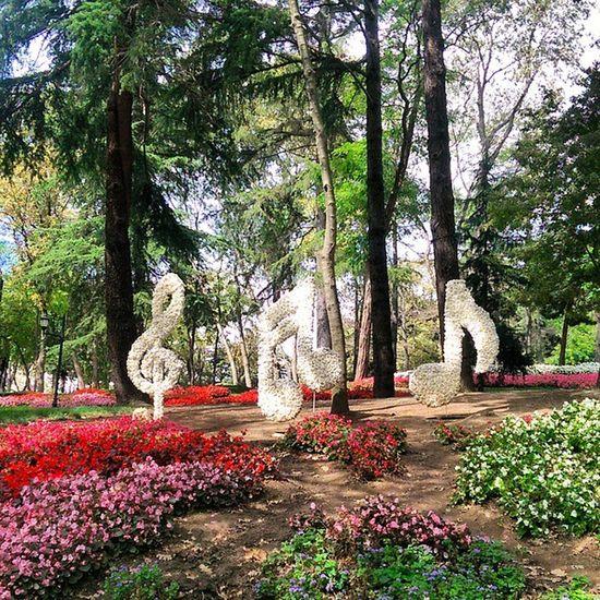 Müzik her yerde... Istanbul Emirgan Park Koru color nature manzara doga travel turkiye turkey flower cicek