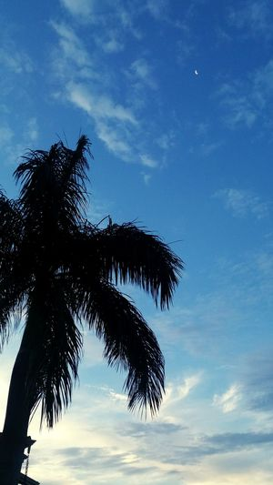Tree Palm Tree Sky Silhouette Blue Nature Low Angle View Cloud - Sky Growth Tree Trunk Beauty In Nature No People Tranquility Day Outdoors Sunset Scenics Close-up Sao Paulo - Brazil Building Exterior Sp Brasil City Tranquility Reflection Sun Day ☀