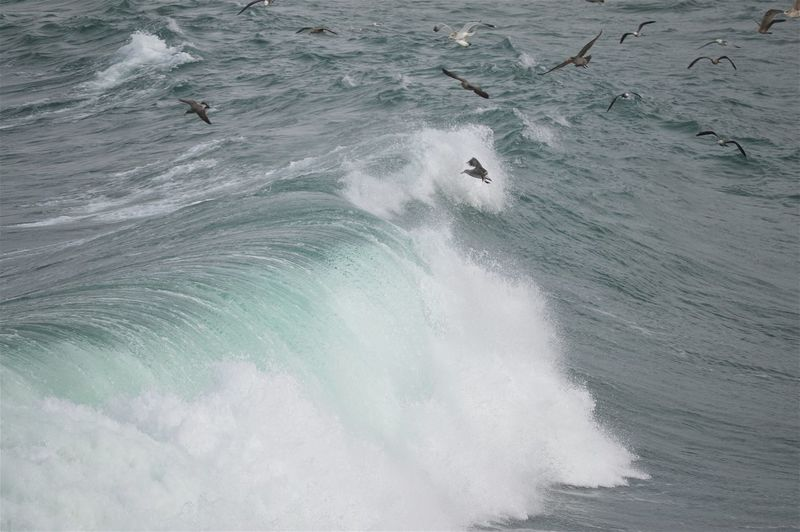 High angle view of birds flying over waves in sea