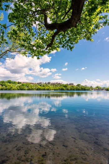 Tree Water Reflection Tranquility Landscape Tranquil Scene Beauty In Nature Cloud - Sky Nature Blue Scenics Lake Travel Destinations Sky Vacations Leaf Social Issues Day Outdoors Beach