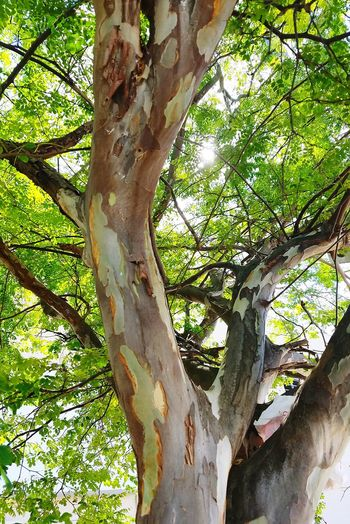 Color Palette Perfect Nature Colors Of Nature Minimalism Open Edit Perspective Textures And Surfaces Shapes And Forms Abstractions In Colors Colour Of Life Cedar Tree