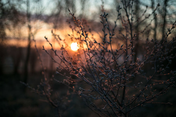 Bare Tree Beauty In Nature Branch Canonphotography Close-up Day Discover Your City Light And Shadow Nature No People Outdoors Plant Scenics Sky Sunset The Week Of Eyeem Tranquility Travel Tree