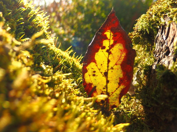 Autumn Leave Nature Asome Color Multi Colored Beauty In Nature Close-up Selective Focus Growing Botany Sunset Sunshine